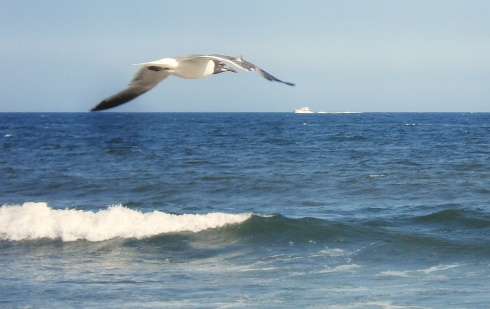 Seagull2014a
