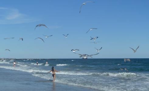 LBI-Seagulls