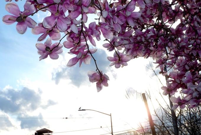 Spring2020b